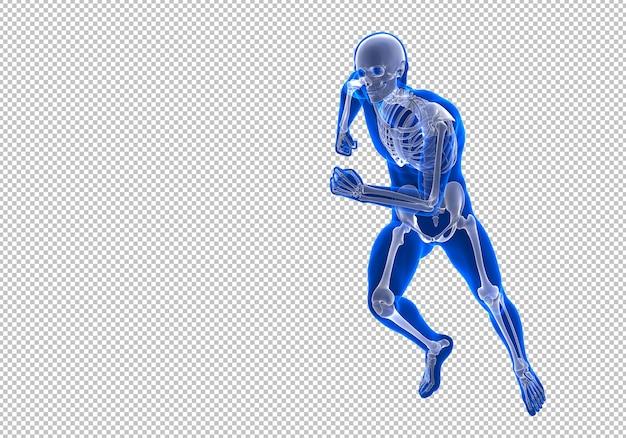 Esecuzione di scheletro umano maschio randering