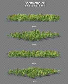 Set di set di piante acrostichum aureum