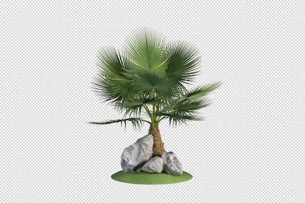 Set di composizioni di palme varietà di rocce nel giardino di arbusti