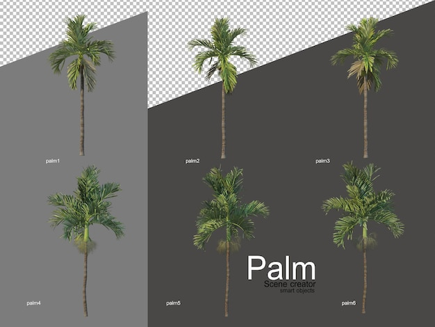 Set di arrangiamenti di palme