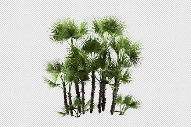 Set di composizioni di palme
