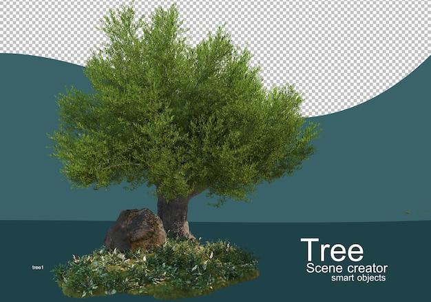 Vengono visualizzati i risultati per le composizioni di alberi e arbusti