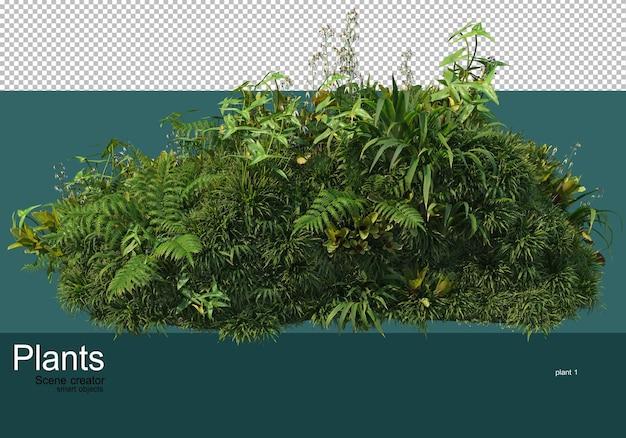 Piccolo giardino con molte piante