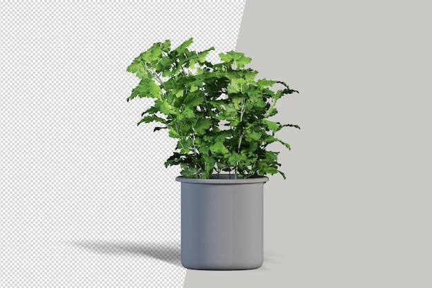 Creatore di piccole piante da interni in vaso cubo