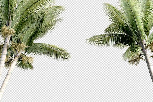 Piccola piantagione di palme Psd Premium