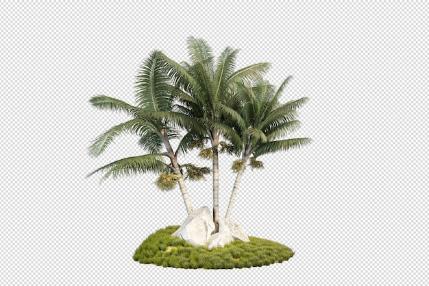 Piccola piantagione di palme