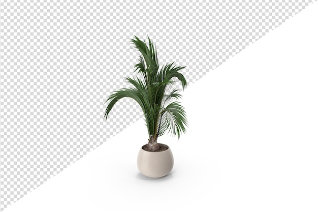 Piccola palma sul vaso isolato