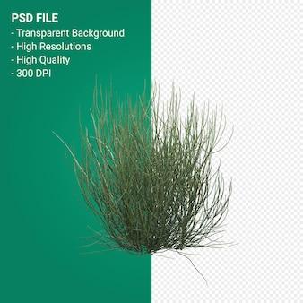 Rendering 3d albero isolato su sfondo trasparente