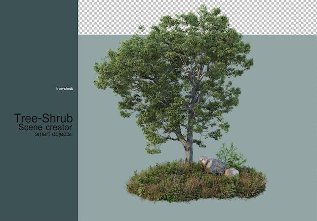 Alberi e arbusti piante erbacee che sono disposte in vari modi per formare un piccolo giardino