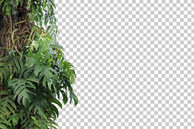 Foglie di albero tropicale e primo piano del ramo isolato