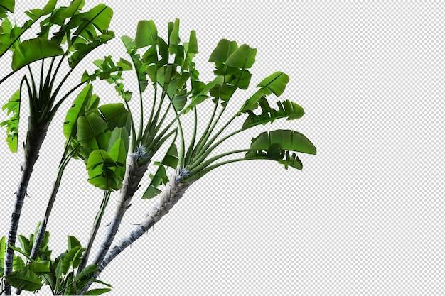 L'albero tropicale lascia il primo piano isolato