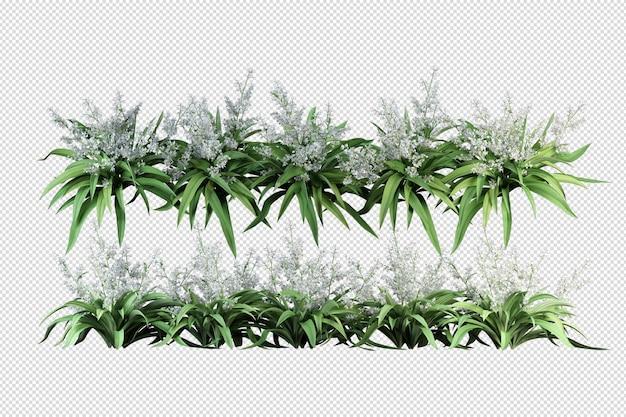 Alberi e fiori tropicali