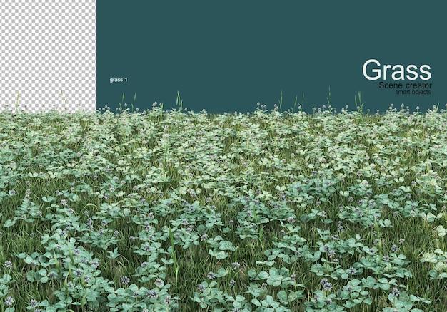 Varietà di design su erba e ghiaia
