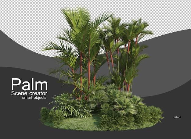 Una varietà di palme