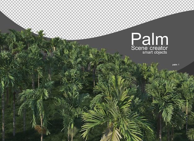 Una varietà di palme Psd Premium