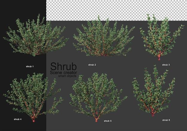 Una varietà di arbusti