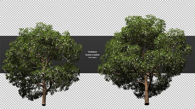 Alberi di varietà percorso di ritaglio alberi isolati rendering 3d albero
