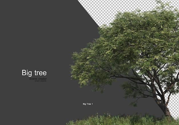 Varietà di alberi ed erba