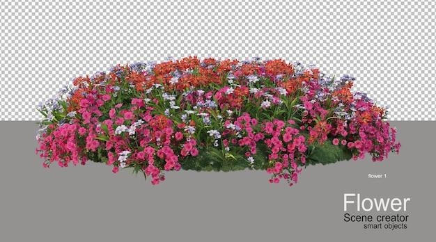 Vari colori di fiori