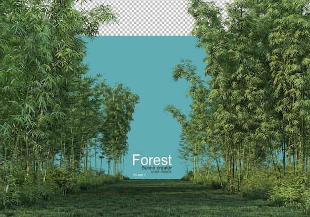 Varie forme di foresta Psd Premium