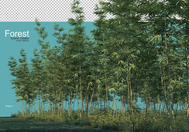 Varie forme di foresta