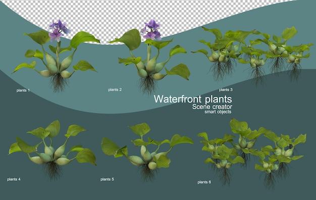 Vari tipi di piante sul lungomare