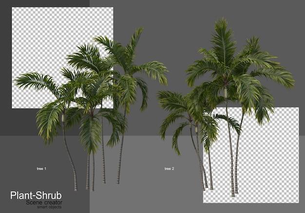 Varie palme e arbusti