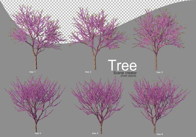 Vari alberi in piena fioritura con bellissimi fiori