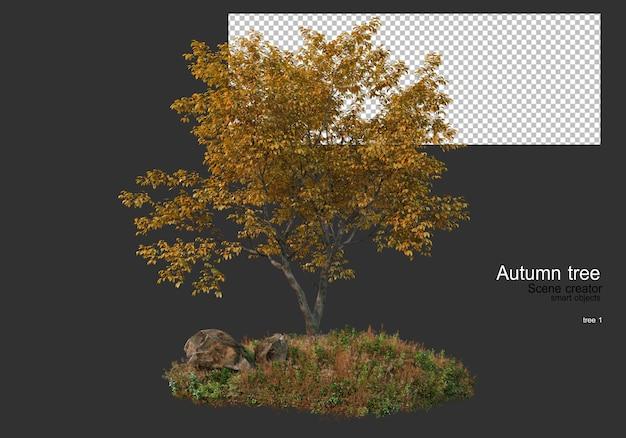 Vari alberi ed erbe durante l'autunno