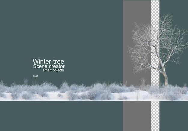 Vari alberi e piante in inverno
