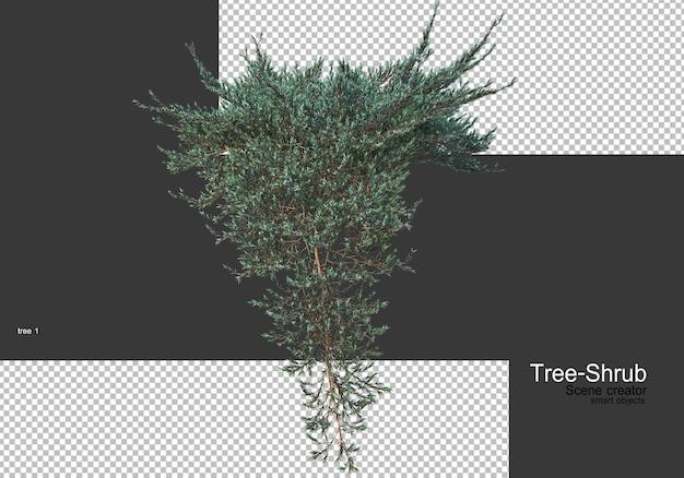 Vari alberi e arbusti