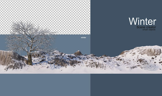 Vari alberi in inverno