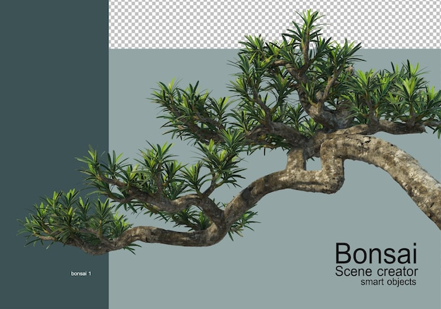Vari tipi di bonsai Psd Premium
