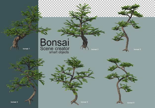 Vari tipi di bonsai