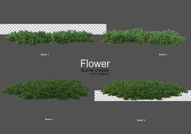Vari tipi di fiori diversi stili