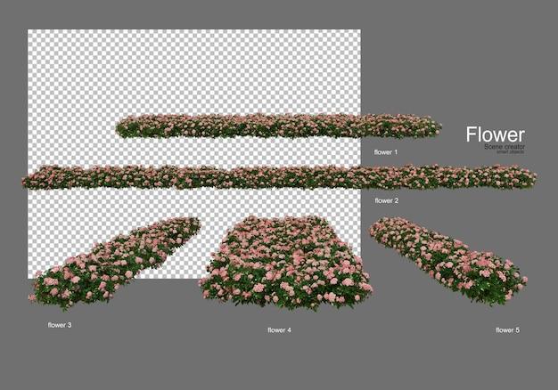 Vari tipi di fiori