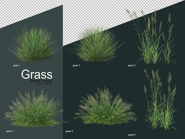 Vari tipi di erba rendering 3d Psd Premium