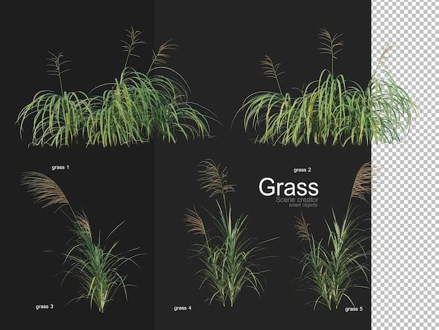 Vari tipi di rendering dell'erba