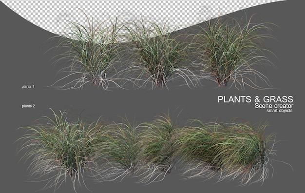 Vari tipi di erba