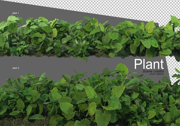Vari tipi di arbusti che rendono isolati Psd Premium
