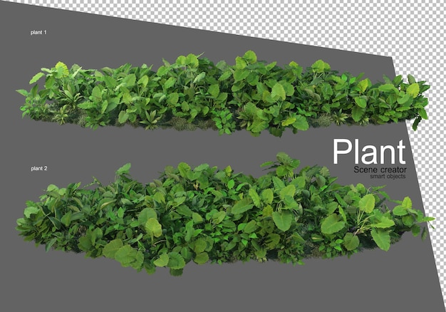 Vari tipi di arbusti che rendono isolati