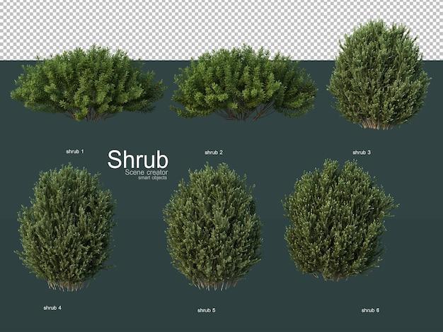 Vari tipi di arbusti