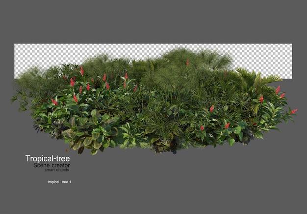 Vari tipi di alberi tropicali