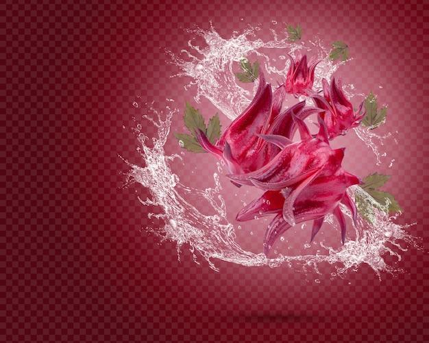 Spruzzi d'acqua su roselle fresche con foglie isolate