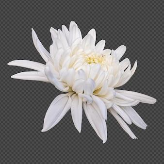 Rendering isolato fiore di crisantemo bianco