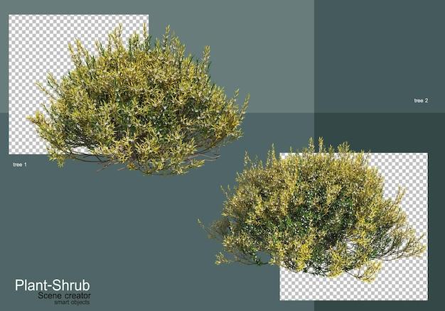 Un'ampia varietà di alberi e arbusti