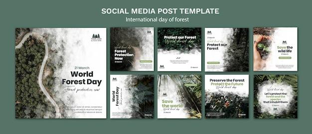 Modello di post di instagram per la giornata mondiale della foresta
