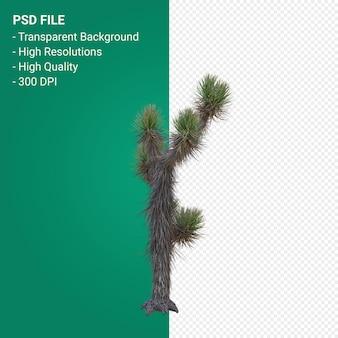 Yucca brevifolia 3d render isolato