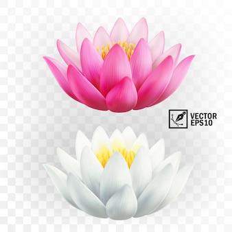 Fiori di loto rosa e bianchi realistici 3d