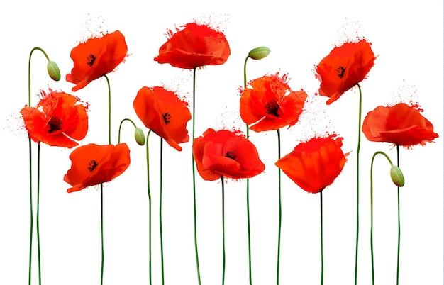Sfondo astratto con fiori di papaveri rossi. vettore.